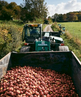 A tractor load of cider apples